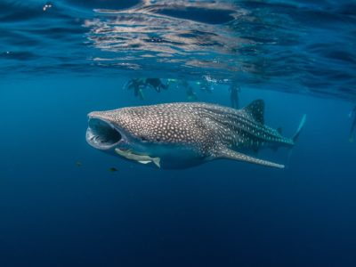 Protecting 1500 km² of Ocean in Sumbawa, Indonesia for 5 years